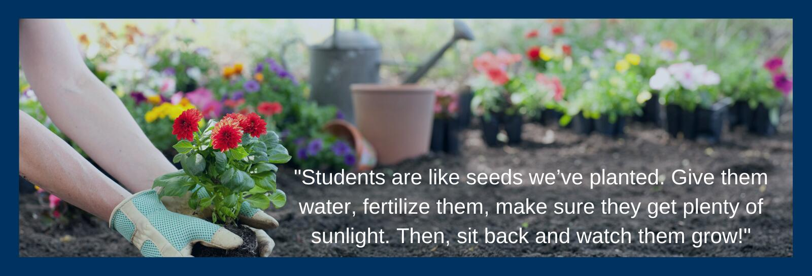 plant seeds quote