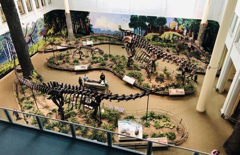 Elevated view of dino exhibit