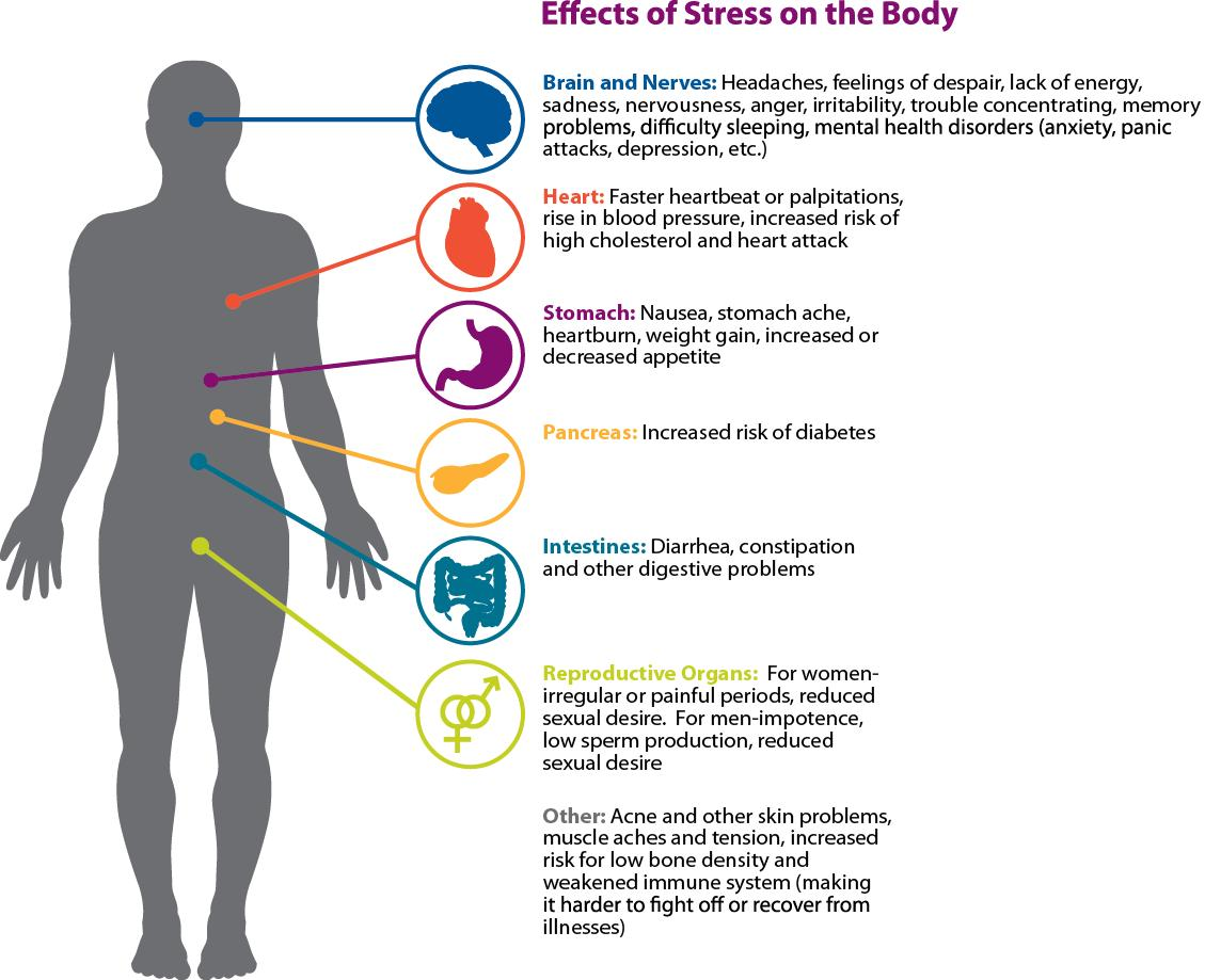 Chart of the various effects stress has on the body