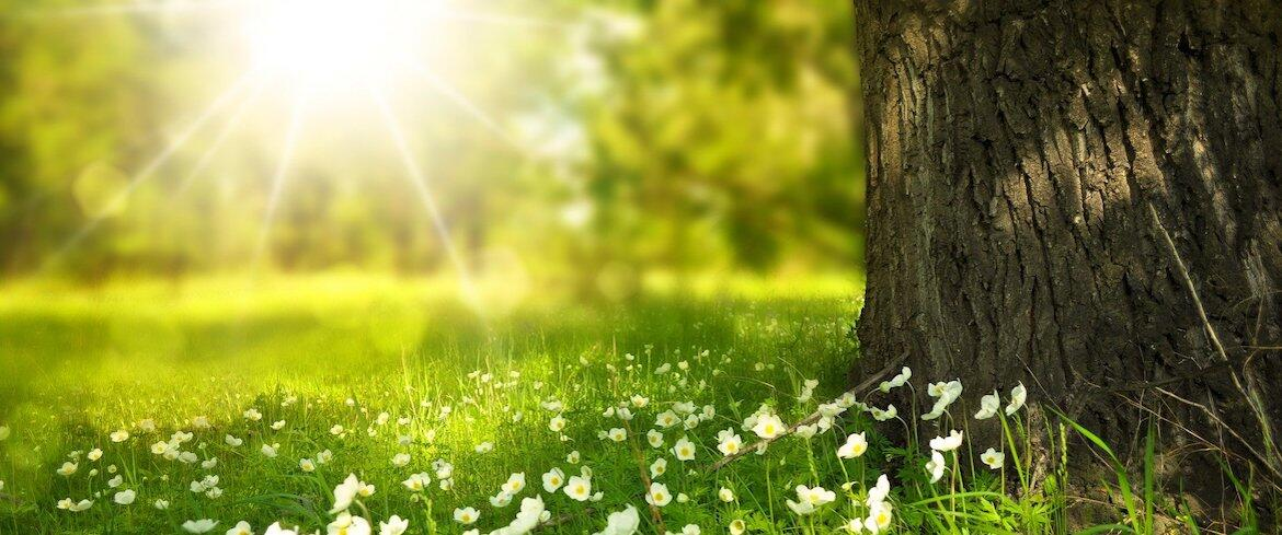 A photograph of a tree, grass, flowers, and the sun.