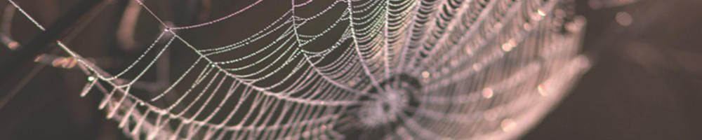 A spider web with raindrops on it glints in the sun