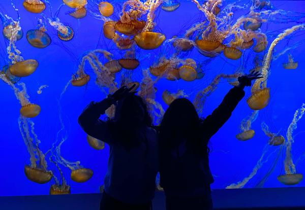 Hands-on Learning at the Monterey Bay Aquarium