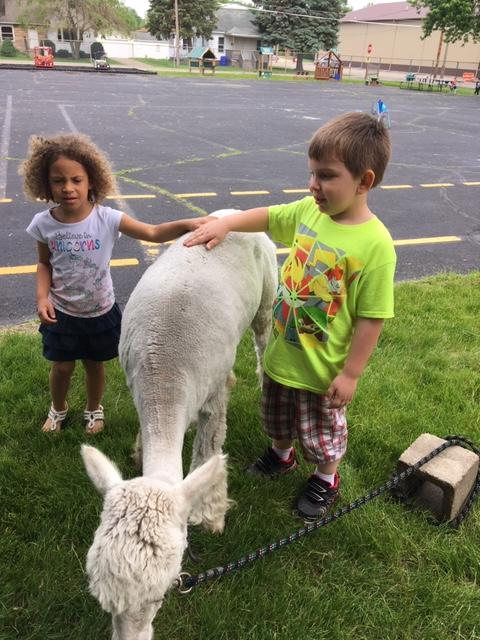 2 preschoolers with a white baby llama
