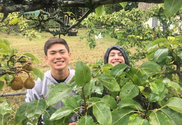 FHS Students at Orchard Gleaning Project
