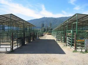 Stalls where student's horses are boarded