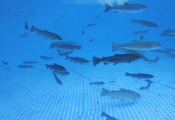 Underwater pic of fish
