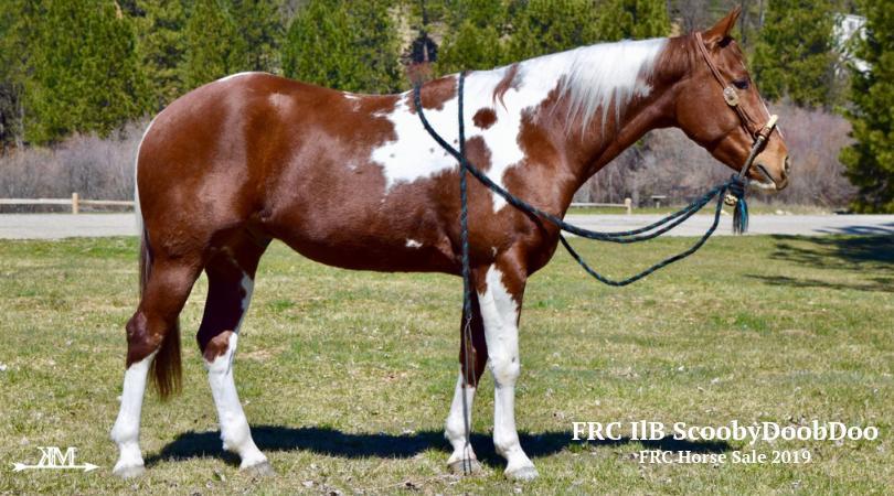 Horse Sale 2018 | Agriculture & Equine Studies
