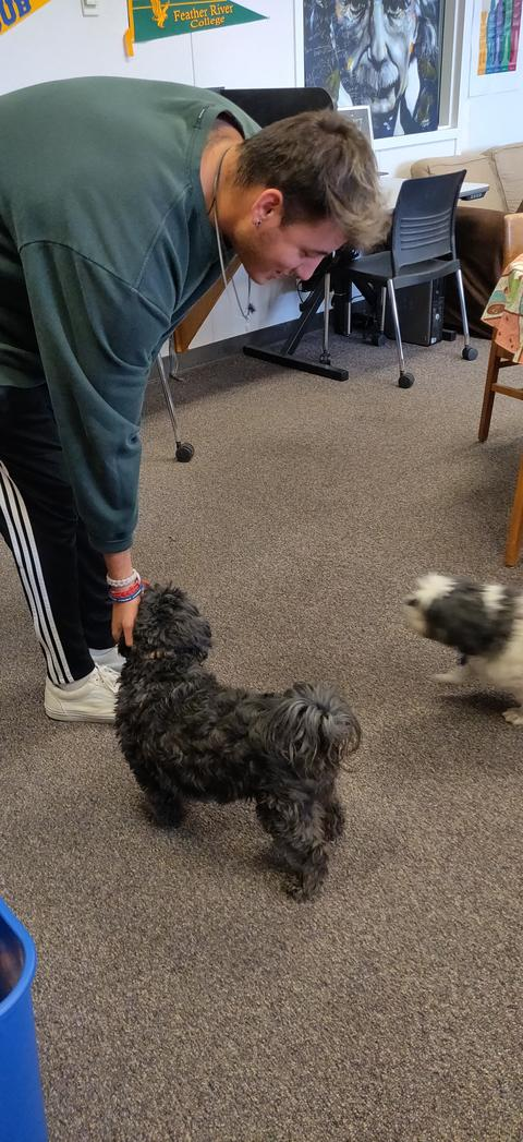 Destress With Doggies 3