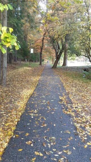Leaf-covered sidewalk