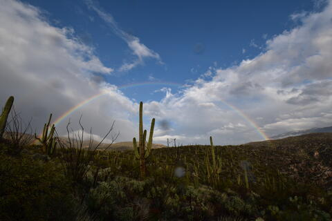 Photo a desert with a blue sky and rainbow