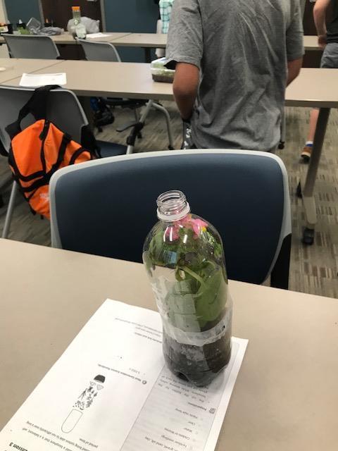 Plant growing inside plastic soda bottle