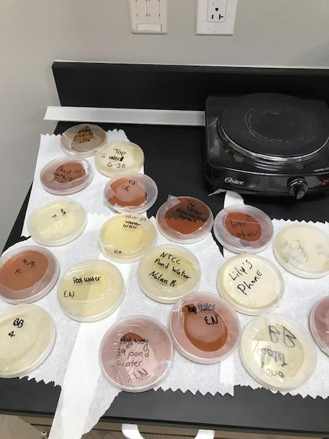 Bacteria samples from various surfaces