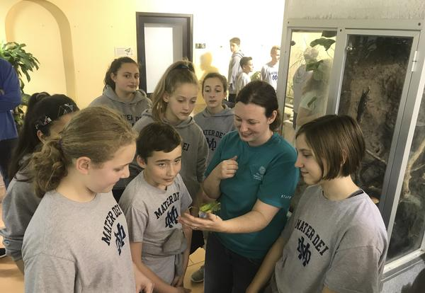 students looking at a giant katydid