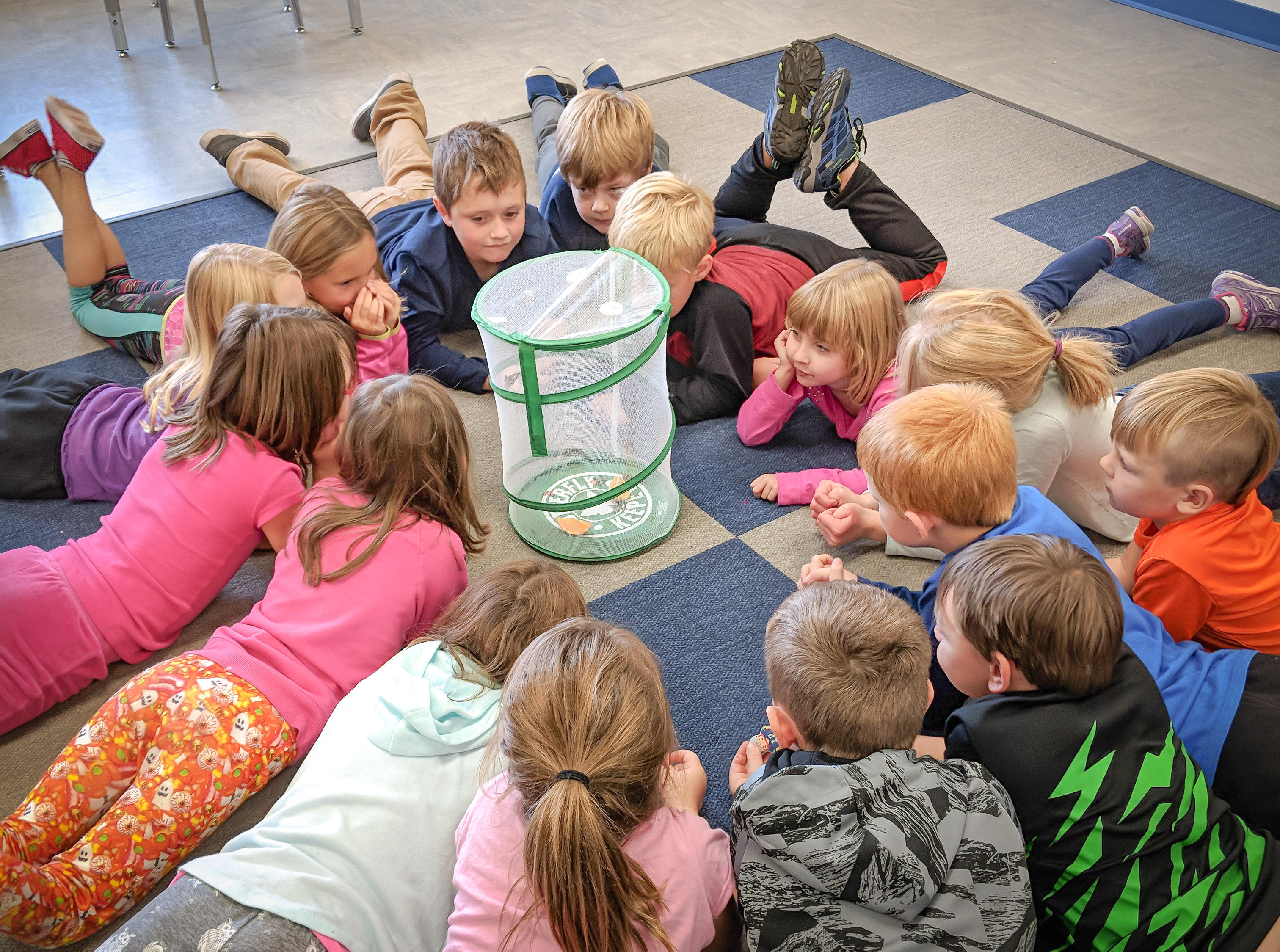 AES Students Observe Butterflies
