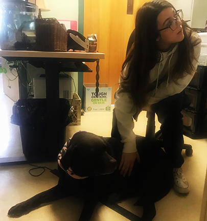 Photo of student petting Kai, of the K9 Therapy Program. Kei relaxes and enjoys, putting the student at ease.