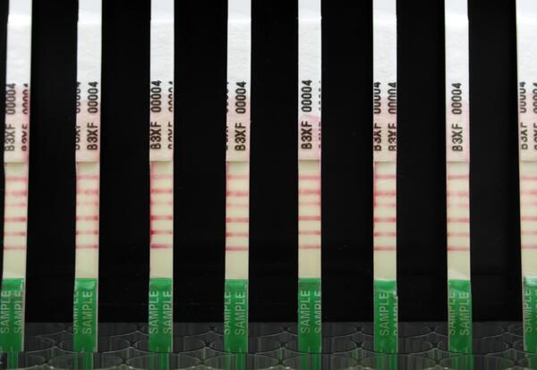 8 combed Immunostrips standing up in wells with five test lines