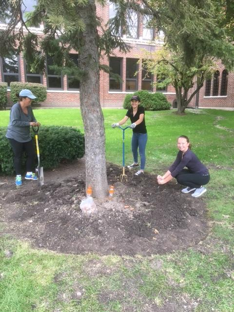 three staff members with shovels around a tree
