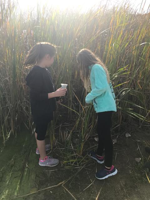 two girls among large stalks of sand grass