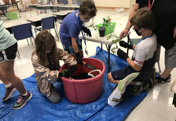 WOW students plant tomato plants