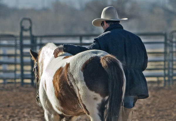 Man in a cowboy hat with a horse