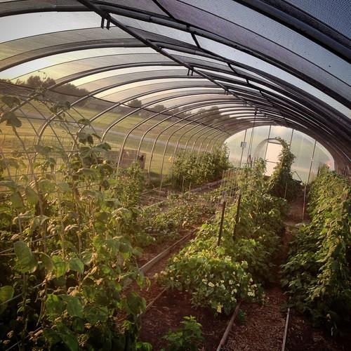Eco Plot hoop house