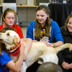 Therapy Dogs Visit Graceland University