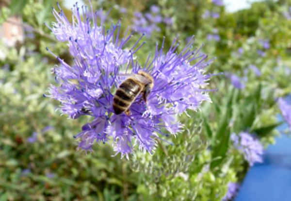 Pollinators of Lamoni: A Guide to Our Arthropod Allies