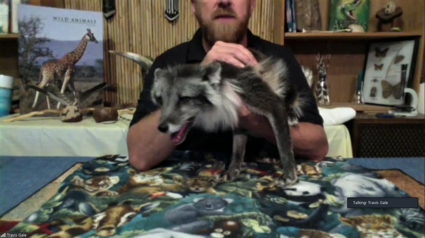 picture of man holding an arctic fox