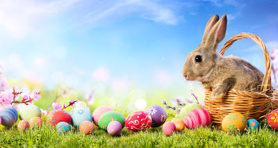 Illustration of Easter Bunny in Basket With Many Eggs Covering Lawn Area