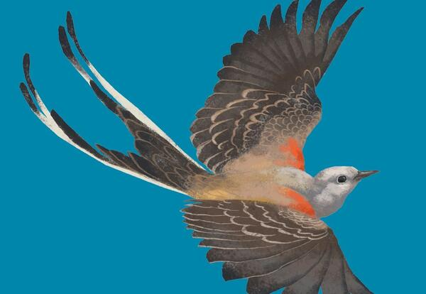 A Beautiful Bird on a Blue Background, Possibly to Emulate a Blue Sky