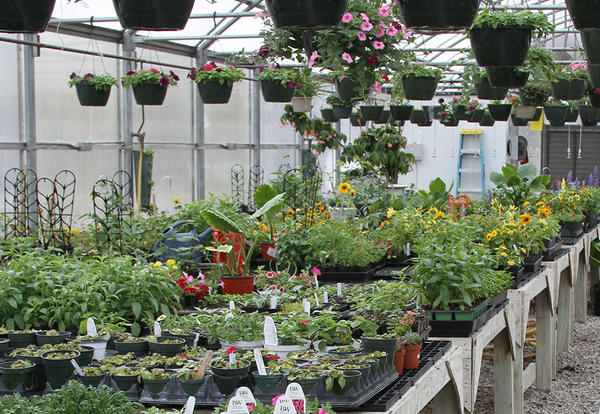 CCC Greenhouse Annual Plant Sale Set For Apr. 8