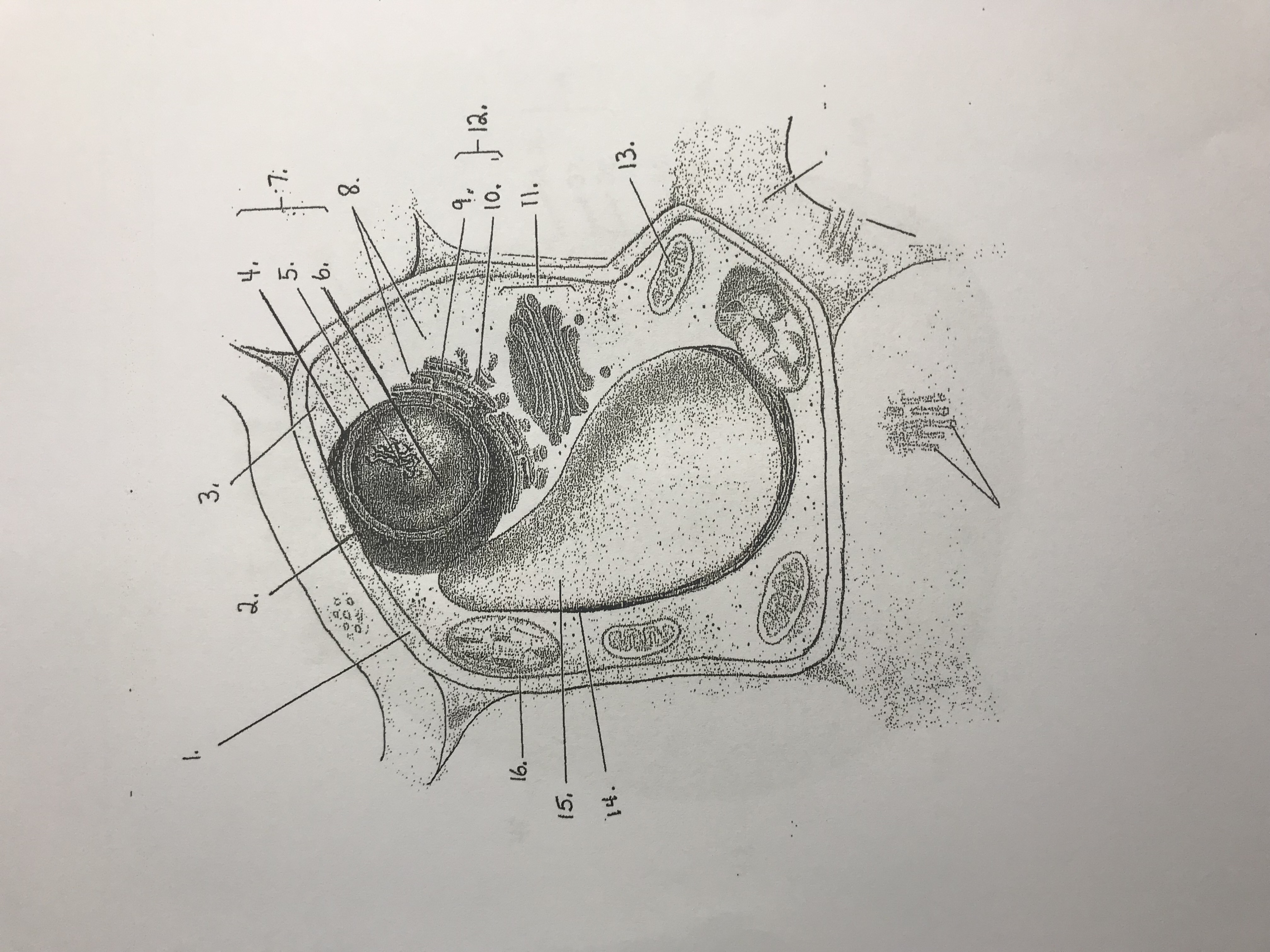 35 Sketch Of The Respiration Organelle And Label The Parts
