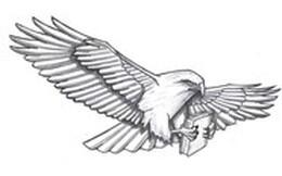 Black and white drawing of a hawk flying through the air