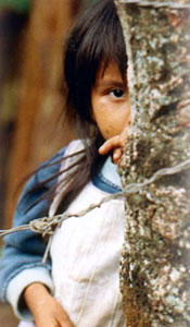 Photo of a girl behind the tree