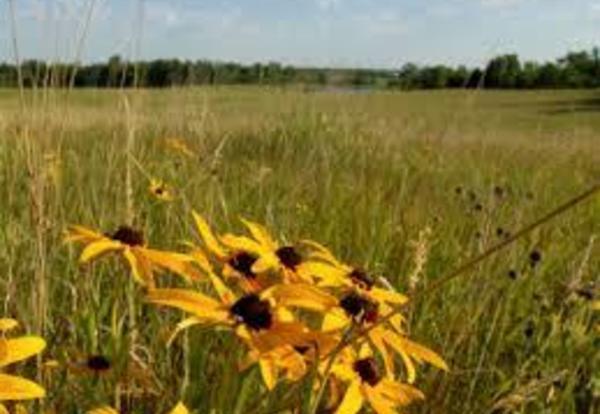 Help Collect Prairie Seed